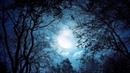 Quivver - Forest Moon (Dmitry Molosh Remix) [Univack]