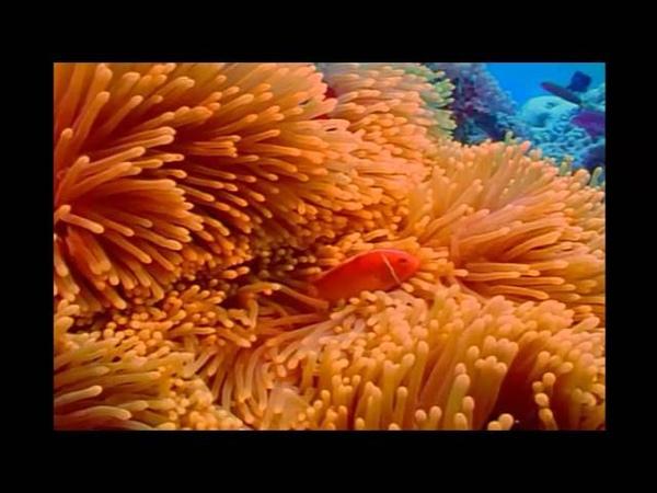Great Barrier Reef Большой барьерный риф Красочный подводный мир Австралия