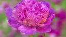 Распускающиеся цветы: два часа красоты