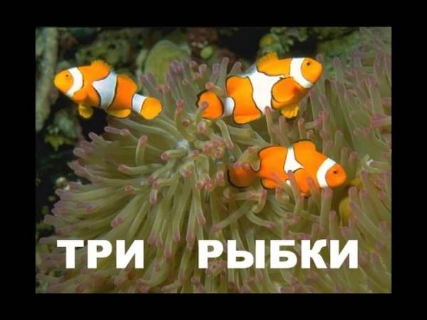 Муз.презентация Посчитаем (Алиса Самбурская)